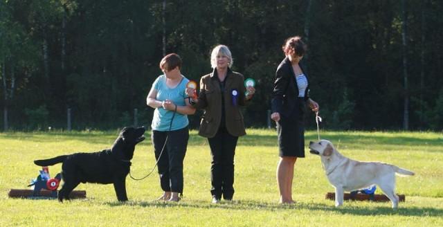 Luige Labrador Specialty 17.08.2012