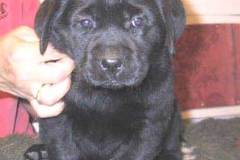 Brandy_head_6weeks