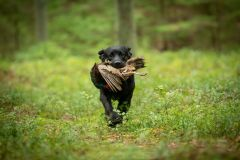 My Brand Last Minute Delivery at the breed trials. Photo Mari-Liis Rihkrand