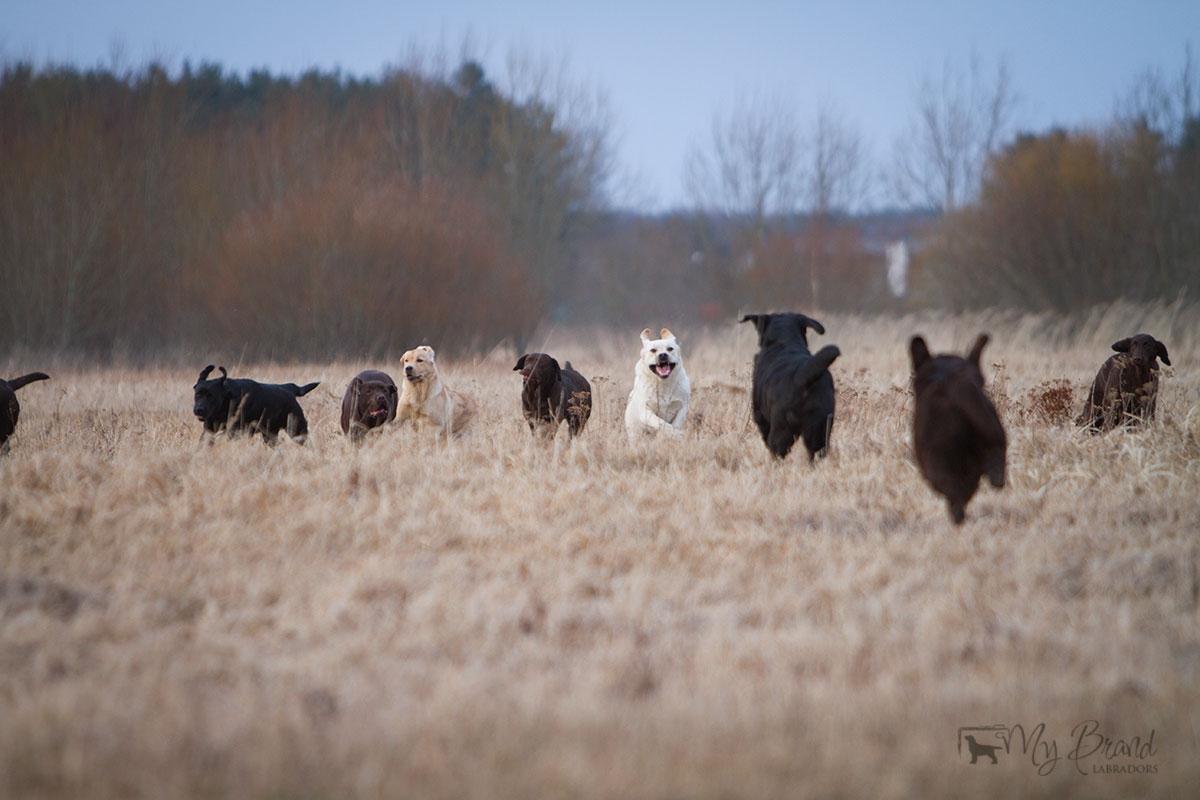 dog-show-24.3-koerad-koos