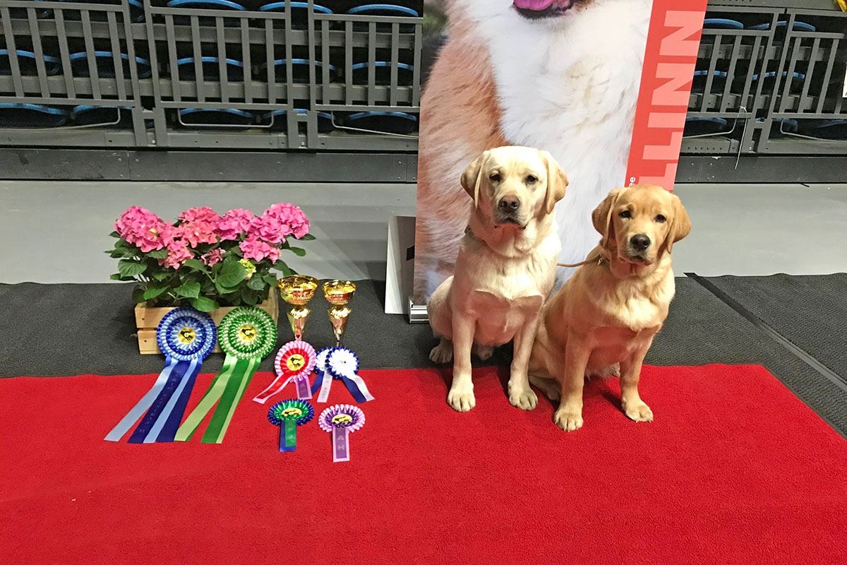 My Brand Sky Wizard BIS-4 Junior & Touch My Soul Reverie Stream BIS-2 Puppy at the National Dog Show Tallinn 24.3.2018