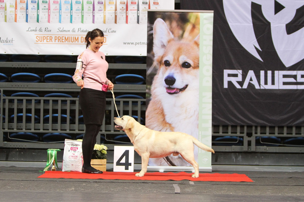 My Brand Sky Wizard BIS-4 Junior at the National Dog Show Tallinn 24.3.2018