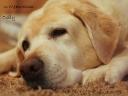 Dolly (1998-2009)