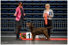 Lucca winning Best in Group at the Tallinn National Dog Show 12.3.2017. Judge Dorota Witkowska from Poland. Photo by talented Sodelight Photography.