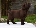 Genuine My Brand Optimus Canis at his breeder in Poland