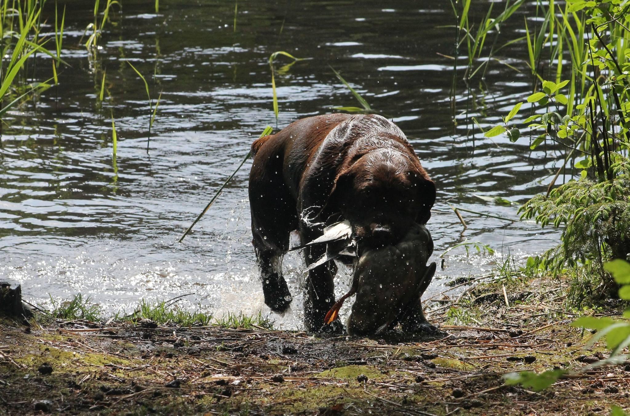 Genuine My Brand Optimus Canis (photo by Reeli Kuhi-Thalfeldt)