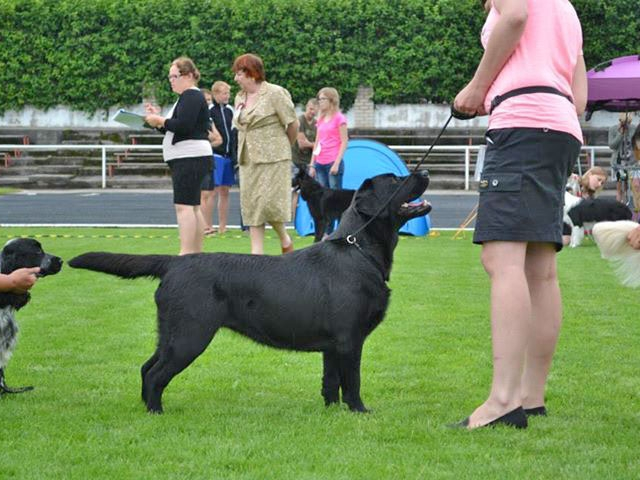 Lulaby Baby Malmesbury Optimus Canis in the Junior Class
