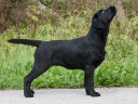 Lulaby Baby Malmesbury Optimus Canis at the age of 5 months