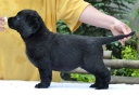 Lulaby Baby Malmesbury Optimus Canis
