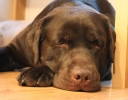 tommy-sleeping