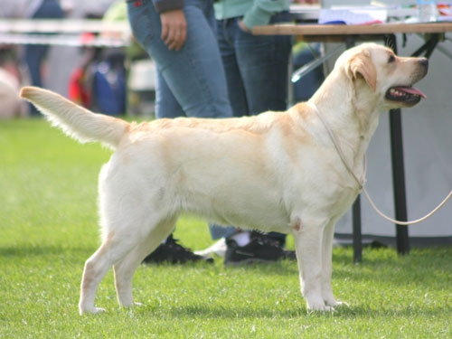 My Brand Edelweiss (18 months old, at the Estonian Winner show)