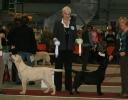 ranya-bos-puppy
