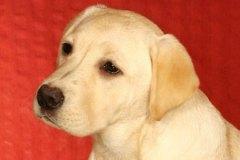 sally-pup