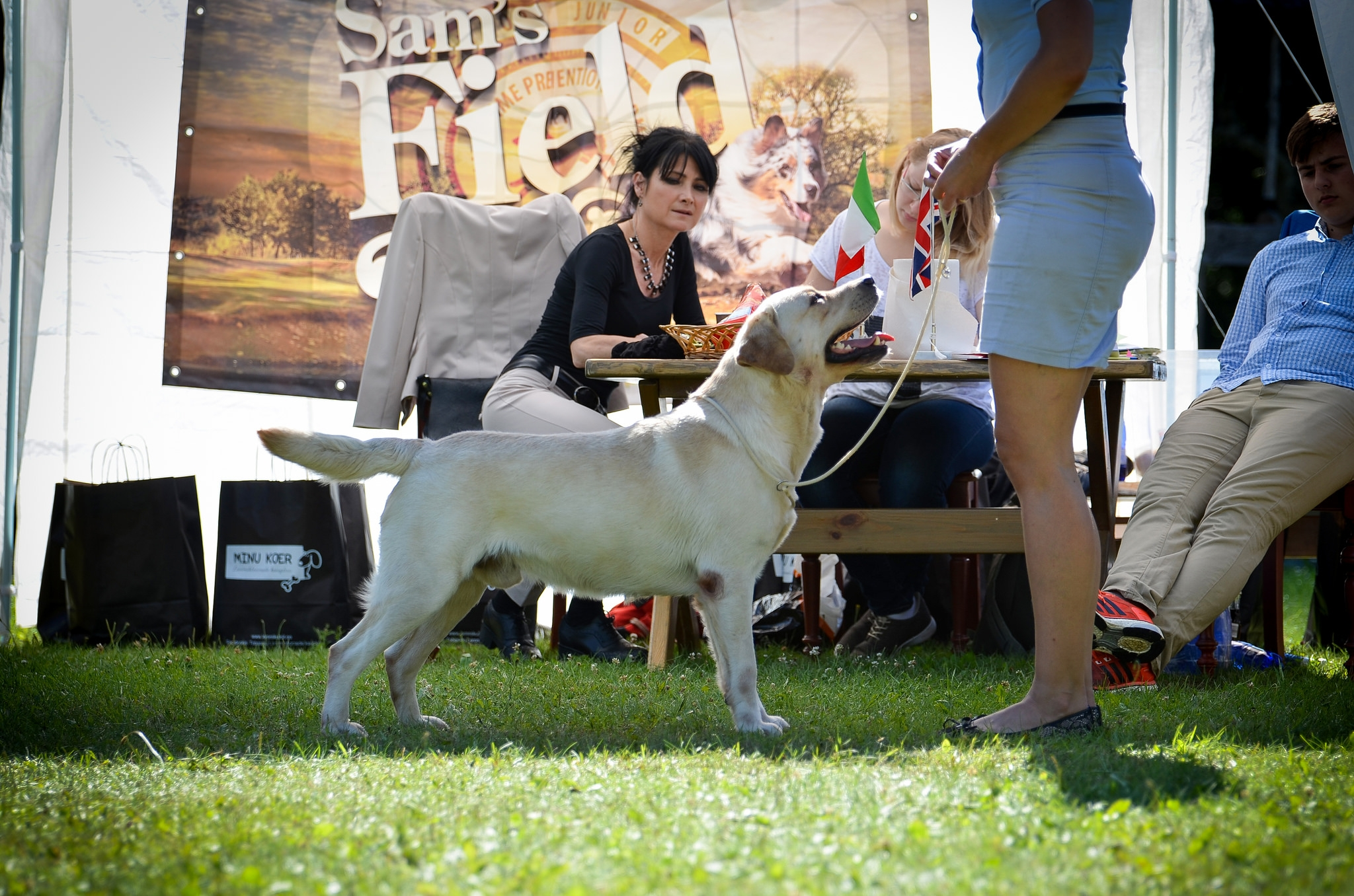 At the Retriever Specialty 2016 in Southern Estonia, judged by Rosa Agostini. Photo by Sodelight Photography.