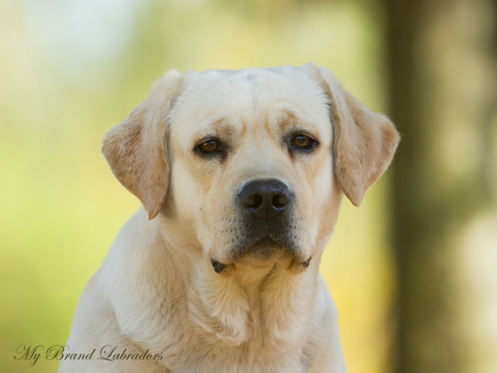 Headshot of Robbie at the age of 2,5 years