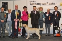 Robbie winning the BEST IN SHOW at the all-breed national dog show in Tartu 11.01.2015. Photo by Jane Jaggo, thank you!