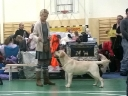 Tawastway's Snowholic (Robbie) in Vaimastvere Dog Show, finishing his EST & RUS JCH title, handled by Britta. Thank You!
