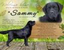 sammy-is-back-home