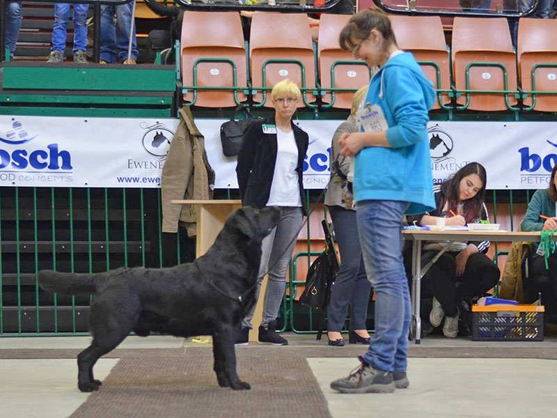 Waterline's Think Twice in Poland, Katowice show 20.03.2015 (1exc, CWC) Photo: kennel Malmesbury.