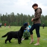 Waterline's Think Twice (Sammy) at the Finnish LRC´s Specialty Show in Harjavalta, Finland 7.6.2014. Handled by his breeder Eva. Photo by Tatiana Potovina.