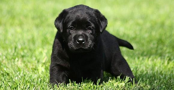 slide-puppy-06