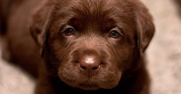 slide-puppy-07